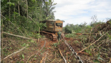 Em meio à pandemia, fiscalização ambiental é reduzida