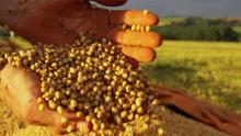 Há esperança no avanço na recuperação judicial de produtor rural
