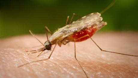 Com cinco infecções registradas neste mês, malária volta a se tornar motivo de preocupação em Goiânia