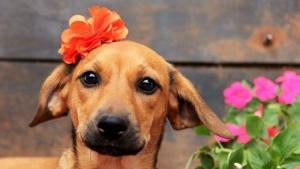 Goiânia recebe primeiro Food Park para cães
