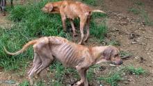 """Governador se revolta com situação de maus tratos a animais: """"autores serão devidamente punidos"""""""