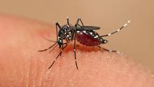 Goiás não corre risco de surto de dengue em 2020, diz Ministério da Saúde