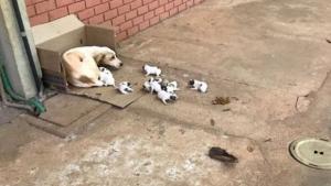 População animal de Goiânia sofre com a falta de atenção do poder público