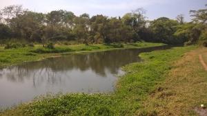 Ações pontuais são necessárias, mas não salvarão o Rio Meia Ponte