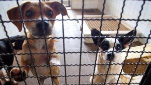 Vereador quer desconto no IPTU de quem adotar animais abandonados