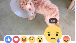 """Facebook anuncia seis novas opções além do """"curtir"""""""