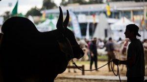 Começa nesta sexta-feira (18) a 73ª Exposição Agropecuária de Goiânia. Veja programação