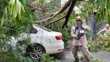 Árvore cai sobre carro e deixa família presa no Setor Jaó