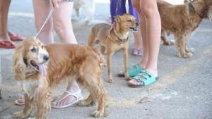 Anápolis é a primeira cidade de Goiás a regulamentar castração pública de animais