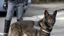 Justiça goiana autoriza utilização de drogas apreendidas para treinamento de cães farejadores