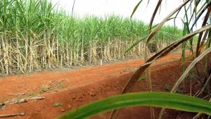 Um terço das usinas de etanol em Goiás está em recuperação judicial