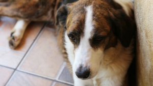 Vereadores aprovam projeto que permite enterrar cães e gatos juntos de seus donos