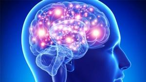 Cientistas divulgam carta aberta pedindo reformulação de projeto europeu sobre o cérebro humano