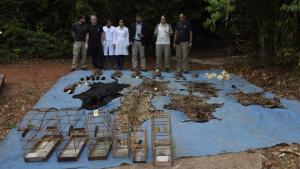 Acusado de maior abate de felinos já registrado pelo Ibama é preso e multado no Pará