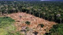 Em novembro, desmatamento na Amazônia aumentou 104%