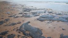 Capes anuncia investimento de R$ 1,3 milhão em pesquisa sobre óleo no litoral brasileiro