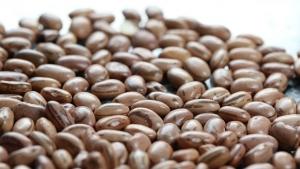 Câmara de Comércio Exterior zera Imposto de Importação de feijão por três meses