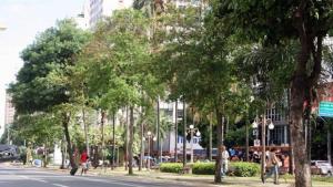 """Projeto da prefeitura substitui árvores """"não adequadas"""" em Goiânia"""