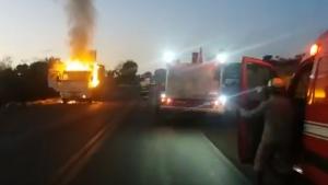 Caminhão com gado bovino raro pega fogo na BR-153, em Goiás
