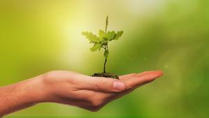 Virada Ambiental pretende plantar mil mudas de árvores em cada um dos municípios goianos