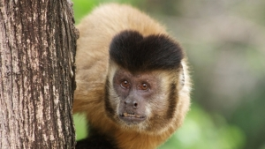 Morte de macacos por febre amarela intensificam campanha de prevenção da doença
