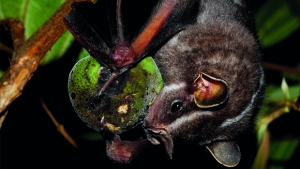 Homem encontra morcego infectado com o vírus da raiva no Setor Campinas