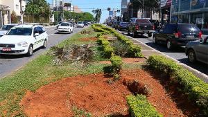 Para especialista, remoção de palmeiras da Avenida 85 fere lei