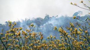 Secretaria Estadual de Meio Ambiente mantém alerta máximo contra queimadas em Goiás