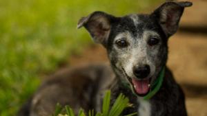 OAB de Goiás lança campanhas contra abandono e apoio à castração de animais