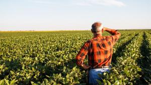 Produtores rurais temem prejuízo com crise de imagem ambiental