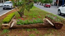 Árvores caídas após tempestades são reaproveitadas em Goiânia