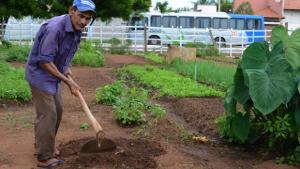 Moradores utilizam lote baldio para cultivo de plantas
