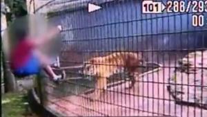 Pai de garoto que teve braço dilacerado por tigre deve responder por lesão corporal