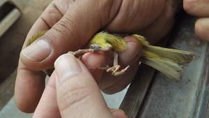 183 animais silvestres são resgatados em Goiás